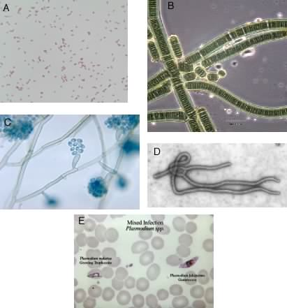 Some examples of the types of microbes present in the environment