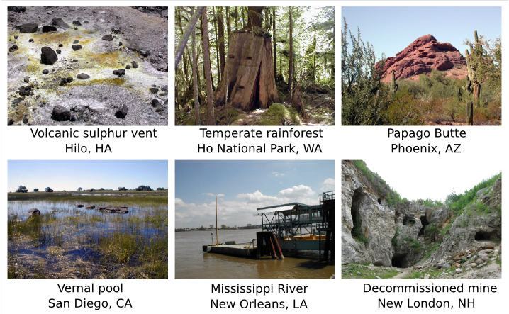 A sampling of the different types of environments where microbes flourish