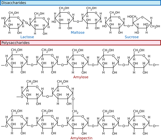 Common disaccharides, trisaccharides and polysaccharides