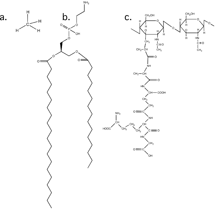 The arrangement of bonds in a carbon molecule