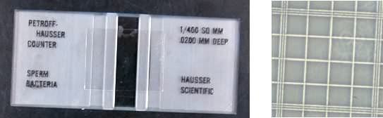 A Petroff-Hausser counting chamber